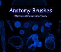 PS Brushes – Anatomy Brushes