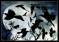 Raven Brushes for photoshop