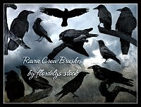 Raven Crow Brushes for photoshop