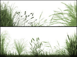 The Grasslands brushes