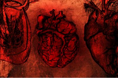 Photoshop Heart Anatomy brushes
