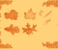 Autumn leaf Free Brushes