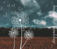 Dandelion brushes photoshop