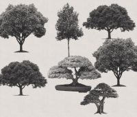 arboles tree brushes photoshop