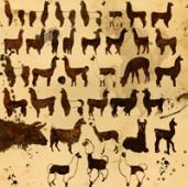 Llama Custom Shape